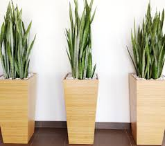 Modern Indoor Plant Pots Fresh Point To The Home Decor Ideas .