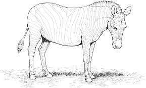 Small Picture Zebra Coloring Pages Without Stripes For Page esonme