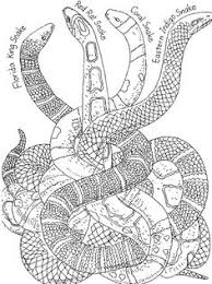 Small Picture great snake coloring pages 75 king cobra coloring pages king