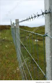 Barbed Wire Fence Photo
