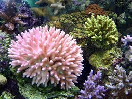 Картинки по запросу вода и коралловый кальций нсп