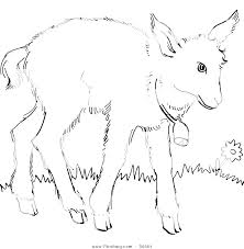 baby mountain lion coloring pages face sheet page pag