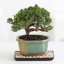 50 DIY Christmas Gift Ideas  Easy Homemade Holiday GiftsChristmas Gift Plants