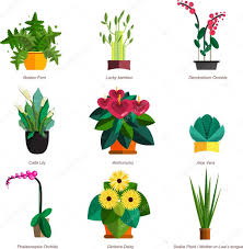 indoor home office plants royalty. Illustration Of Houseplants, Indoor And Office Plants In Pot. Dracaena, Fern, Bamboo Home Royalty