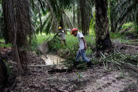 Cpo Future Price Chart Factors Affecting Crude Palm Oil Cpo Prices Ig En
