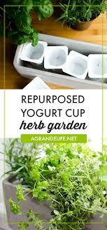 repurposed yogurt cup herb garden a