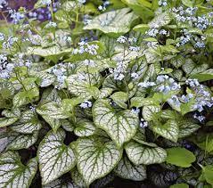zone 7 perennials white flower farm