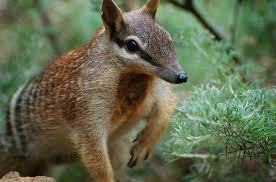 Small Picture How To Feed A Numbat Zoo Cookery Aids Endangered Species The