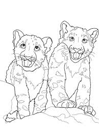 Babies Snow Leopard Coloring Page Free Printable Coloring Pages