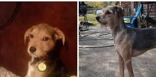 "Mobile SPCA - SAGE UPDATE from Kristie Ramey Cobb!! ""4 yrs ago we ..."