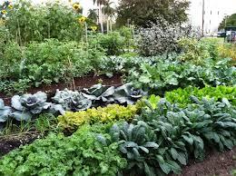 florida vegetable gardening. Beautiful Winter Vegetable Garden Florida Gardening A