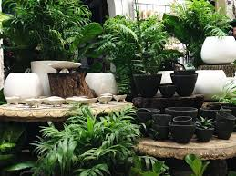 garden nursery melbourne cbd. the nursery has a changing seasonal range of indoor colour and foliage. you will often find cymbidium orchids, oncidium orchids phalaenopsis as garden melbourne cbd s