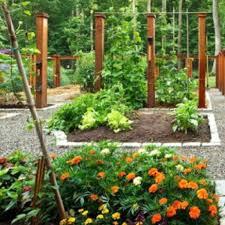 garden designs australian native bed ideas archives catsandfls within design design