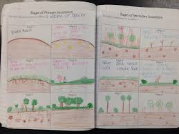 Primary Succession And Secondary Succession Venn Diagram Science 7 Unit Interactions Ecosystems Primary And