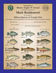 Catfish Chart Tennessee Angler Recognition Program