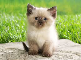 baby animals wallpapers. Simple Animals Cute Baby Animal Background HD To Animals Wallpapers A