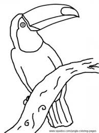 Small Picture The pictures for Rainforest Toucan Coloring Page