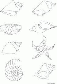 Starfish Drawings Seattle Nature Preschool Lesson Plan Turtles