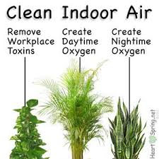 Air Filtering Houseplants: plants used to clean Indoor air pollution. See  kamal Meattle in ted too. this is very interesting and useful.