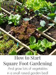 how to start a small garden. How To Start Square Foot Gardening- Learn Grow A Lot Of Vegetables In Small Garden D