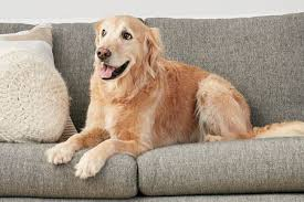 couch upholstery choices for cat and