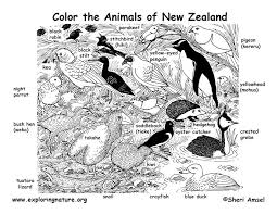 Small Picture Coloring Book New Zealand Coloring pages tuatara reptiles New