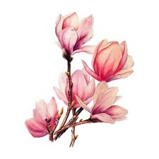 Download Tattoo Flower Branches Magnolia Watercolour Watercolor