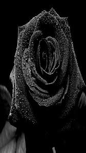 iphone 6 wallpaper rose. Exellent Rose Black Rose Iphone Wallpaper Throughout 6