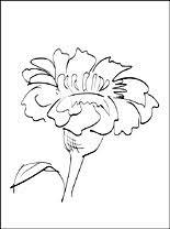 Bloemen Gratis Kleurplaten Pagina 5