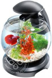 Купить <b>Комплекс аквариумный Tetra</b> Cascade Globe черный 6.8л ...