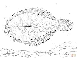 Small Picture Bigeye Flounder coloring page Free Printable Coloring Pages