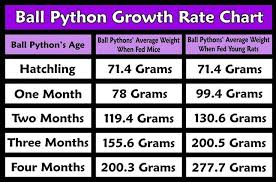 Rat Feeder Size Charts Google Search Ball Python Morphs