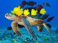 16 лучших изображений доски «Океан» | Океан, Подводный ...