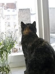 Wohnungskatzen So Wird Ihre Wohnung Katzensicher