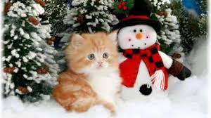 Christmas Kittens Wallpapers - Top Free ...
