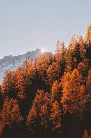 Autumn Mountain Pictures