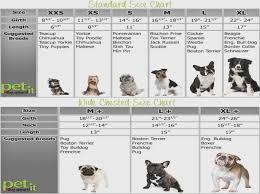 Terrier Size Chart Maltese Growth Chart Goldenacresdogs Com