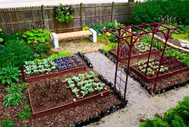 Small Picture Triyaecom Vegetable Garden Ideas For Small Backyards Various