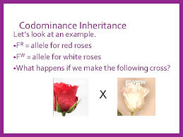 Alleles can be recessive, dominant or codominant genes. Codominance Definition Simple
