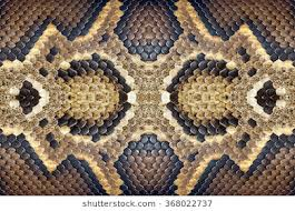 Python Pattern Mesmerizing Python Pattern Images Stock Photos Vectors Shutterstock