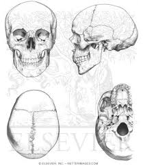 Small Picture Skull Coloring Pages Anatomy Coloring Pages Pinterest