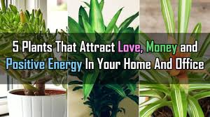 feng shui plants for office. 5 Plants That Attract Love, Money And Positive Energy In Your Home Office Feng Shui For S