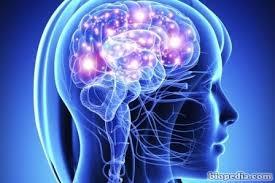 Resultado de imagen de sistema nervioso