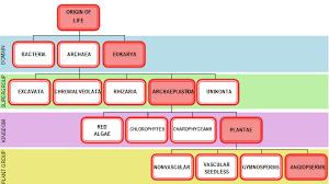 Punica Granatum Pomegranate An Antioxidant Goldmine
