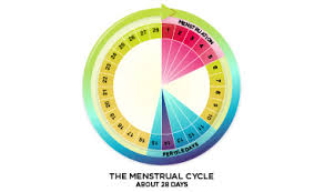 Typical Menstrual Cycle Chart Menstrual Cycle Basics Your Period
