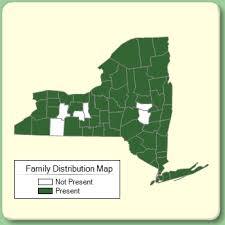 Aquifoliaceae - Family Page - NYFA: New York Flora Atlas - NYFA ...