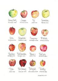 Types Of Apples Chart How Bout Them Apples Pie Provisions
