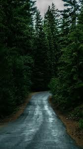 Dark Green Forest Green Iphone Wallpaper