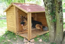 how to choose the best outdoor dog kennel feeders birdhouses