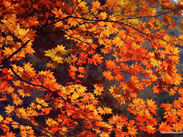Pinterest Autumn Wallpapers - Top Free ...